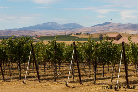 3 Steves Winery view, Livermore, California