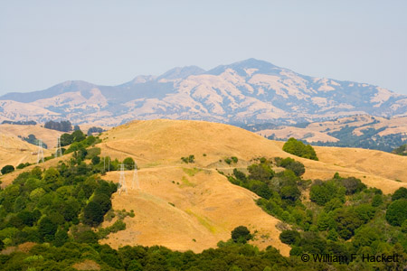 Mount Diablo, from Huckleberry Regional Preserve