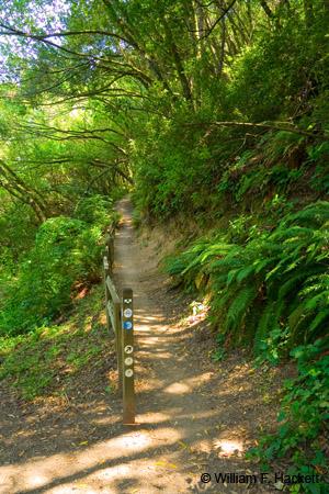 Huckleberry Botanic Regional Preserve path