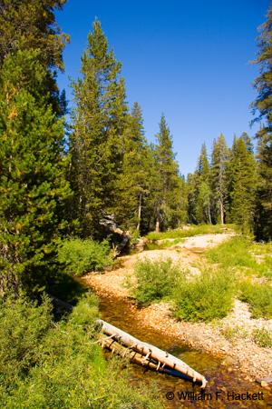 Yosemite Creek from Tioga Road